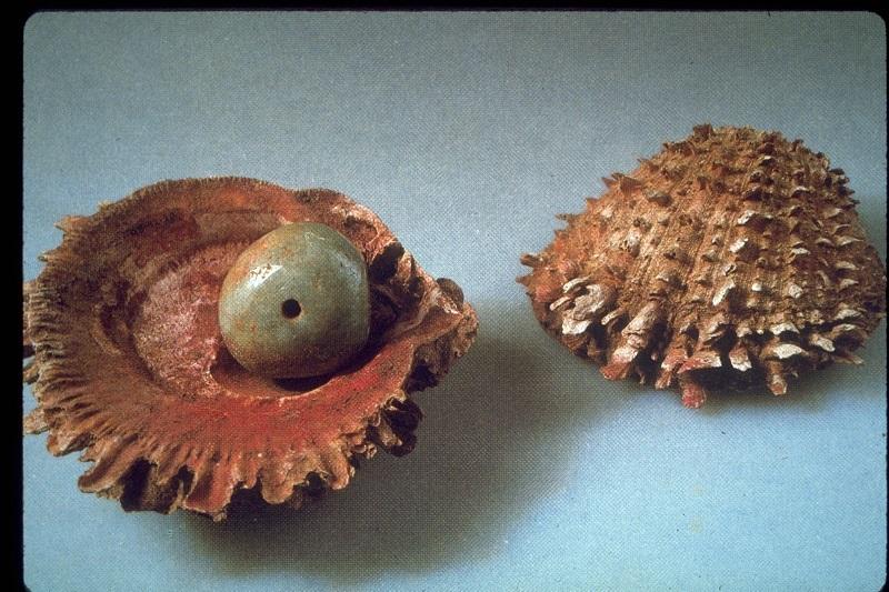 Spondylus Shells